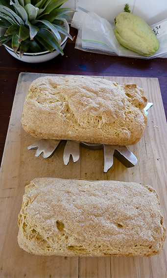 P1050862_GF bread loaves_web