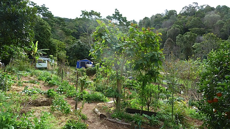 Part of the kitchen garden at Maungaraeeda.