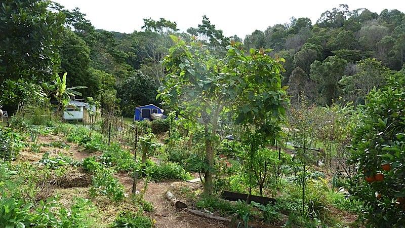 Part of the kitchen garden at Maungaraeeda.