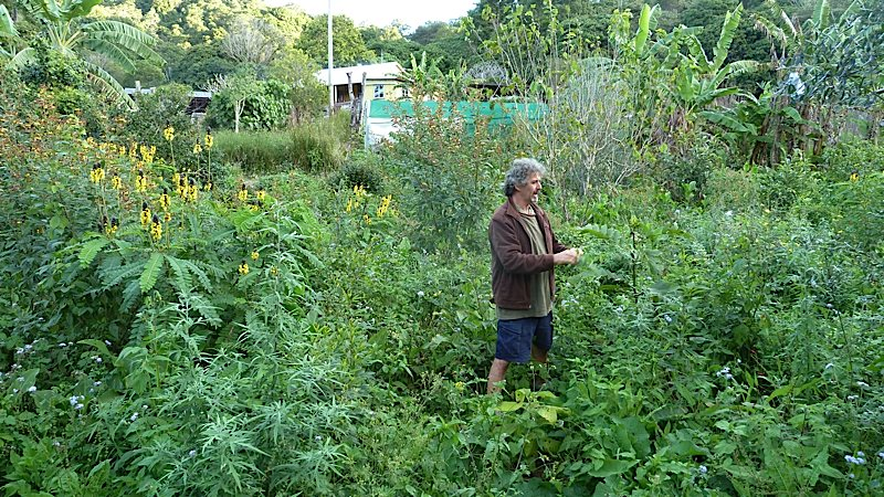 Tom in a fairly new food forest, surrounded by mostly support species.