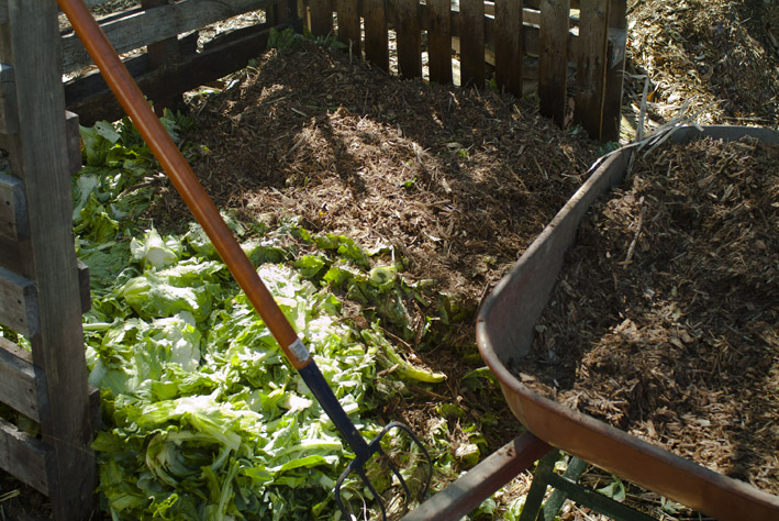 DSCF4682_compost veg on woodchip_small