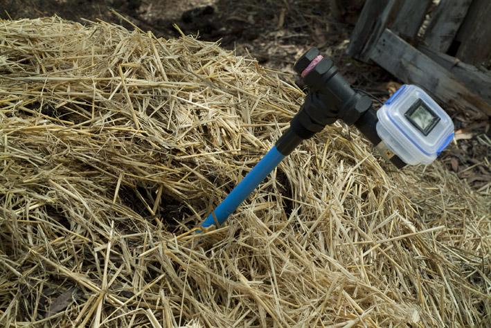 DSCF4765_in compost_small